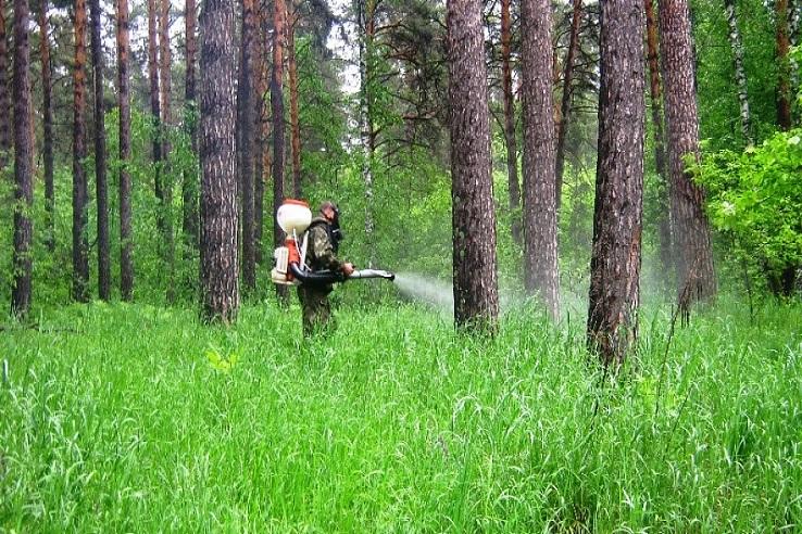 Обработка от клещей лесных массивов в Томске